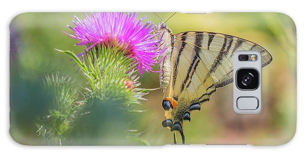 Scarce Swallowtail - Iphiclides Podalirius Galaxy Case