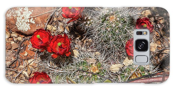 Scarlet Cactus Blooms Galaxy Case