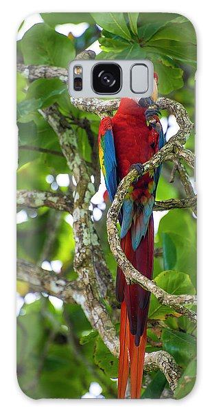 Galaxy Case featuring the photograph Scarlet Macaw by David Morefield
