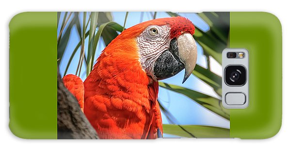 Galaxy Case featuring the photograph Scarlet Macaw by Steven Sparks