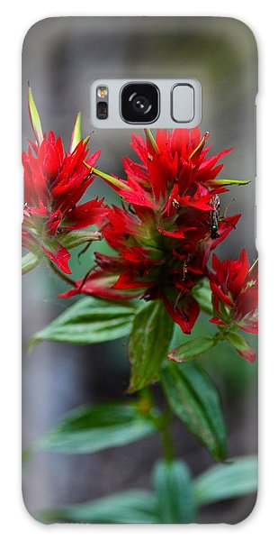 Scarlet Red Indian Paintbrush Galaxy Case by Karon Melillo DeVega