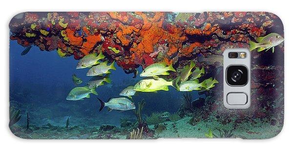 Schooling Fish At Calf Rock Galaxy Case