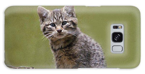 Scottish Wildcat Kitten Galaxy Case