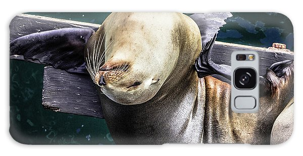 California Sea Lion - Scratch The Itch Galaxy Case