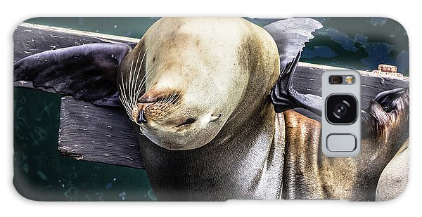 California Sea Lion - Scratch The Itch Galaxy Case
