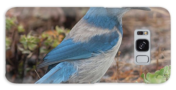 Scrub Jay Framed In Green Galaxy Case