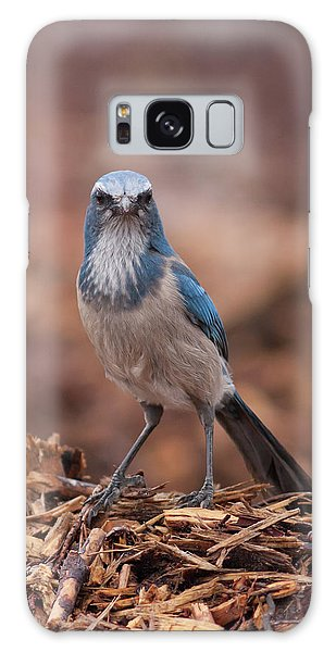 Scrub Jay On Chop Galaxy Case