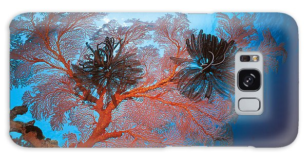 Feather Stars Galaxy Case - Sea Fans by Ed Robinson - Printscapes