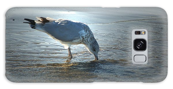 Sea Gull At Sundown Galaxy Case