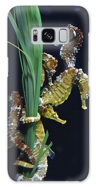 Galaxy Case featuring the photograph Sea Horse by Joan Reese