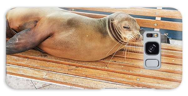 Sea Lion On A Bench, Galapagos Islands Galaxy Case