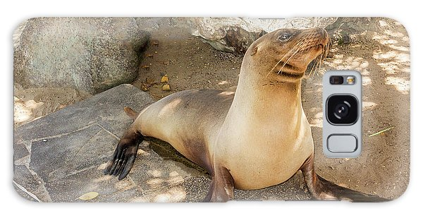 Sea Lion On The Beach, Galapagos Islands Galaxy Case