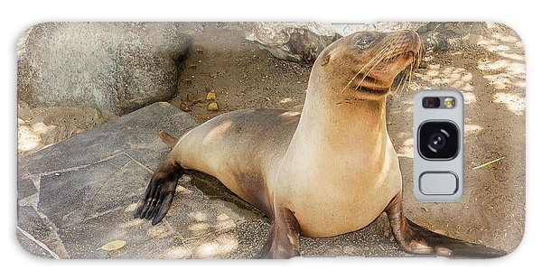 Sea Lion On The Beach, Galapagos Islands Galaxy Case by Marek Poplawski