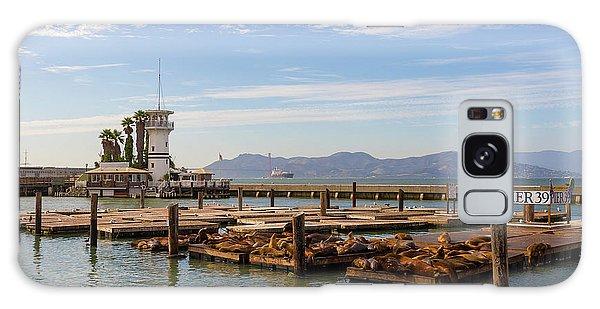Sea Lions At Pier 39 In San Francisco Galaxy Case
