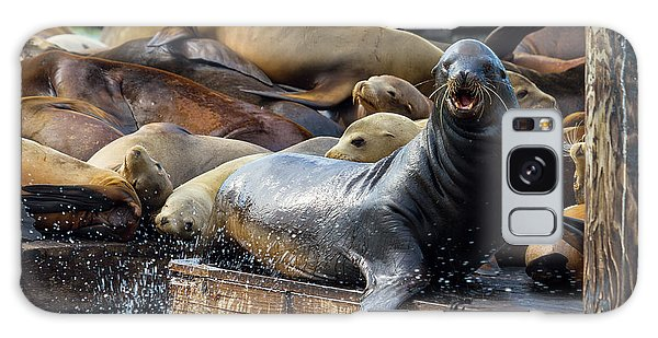 Sea Lions On The Floating Dock In San Francisco Galaxy Case