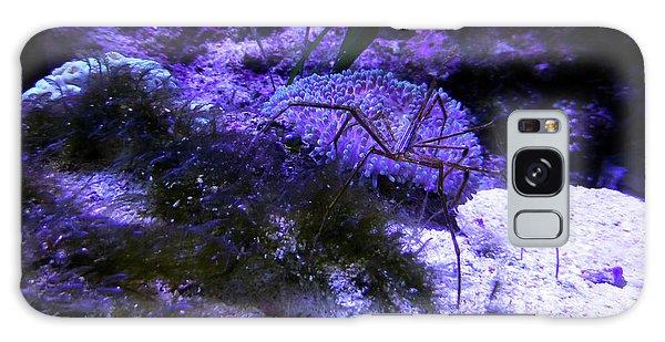 Sea Spider Galaxy Case