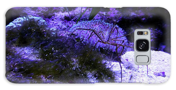 Galaxy Case featuring the photograph Sea Spider by Francesca Mackenney