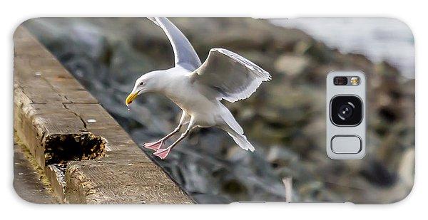 Seagull Landing Galaxy Case