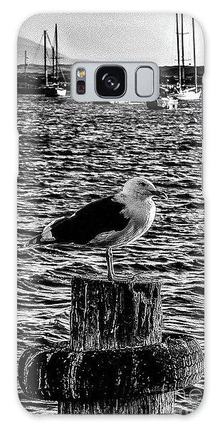 Seagull Perch, Black And White Galaxy Case