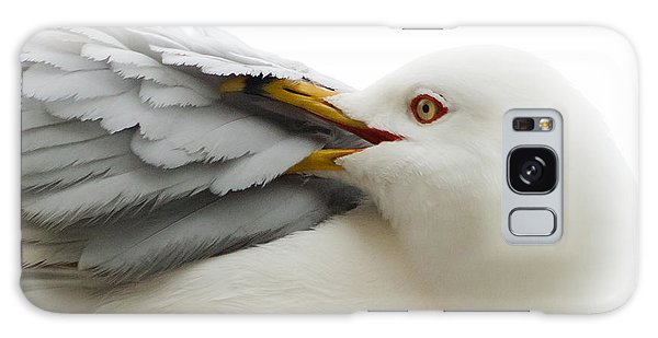 Seagull Pruning His Feathers Galaxy Case