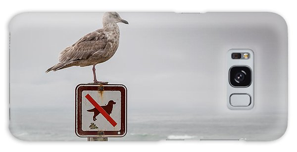 Seagull Standing On Sign And Looking At The Ocean Galaxy Case