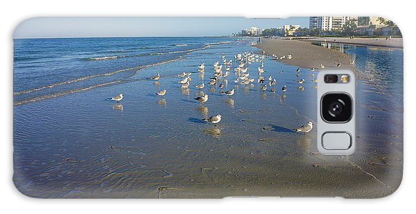 Seagulls And Terns On The Beach In Naples, Fl Galaxy Case