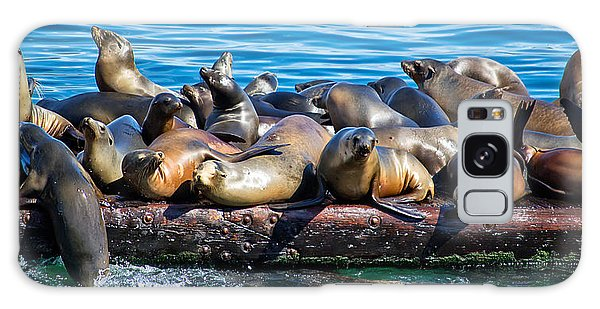 Sealions On A Floating Dock Another View Galaxy Case