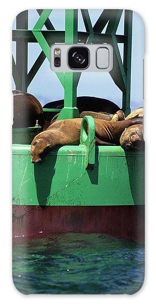 Seals On Channel Marker Galaxy Case