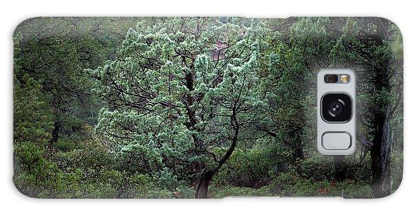 Sedona Tree #1 Galaxy Case