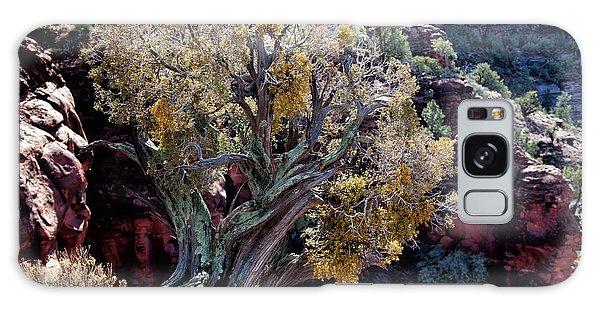 Sedona Tree #2 Galaxy Case