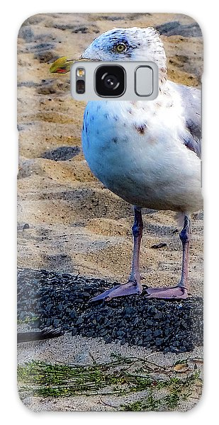 See The Gull Galaxy Case