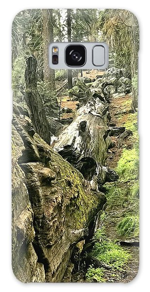 Sequoia Fallen Tree Galaxy Case