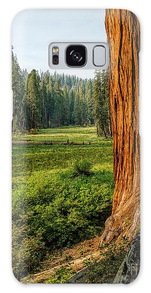 Sequoia Np Crescent Meadows Galaxy Case