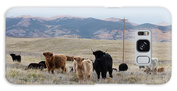 Shaggy-coated Cattle Near Jefferson Galaxy Case by Carol M Highsmith