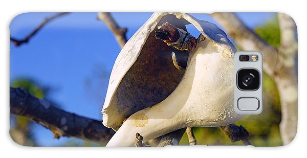 Shell On Brach Of Mangrove Tree At Barefoot Beach In Napes, Fl Galaxy Case