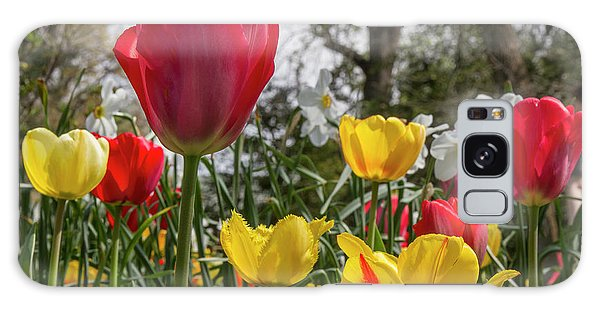 Galaxy Case featuring the photograph Sherwood Gardens 17 by Chris Scroggins