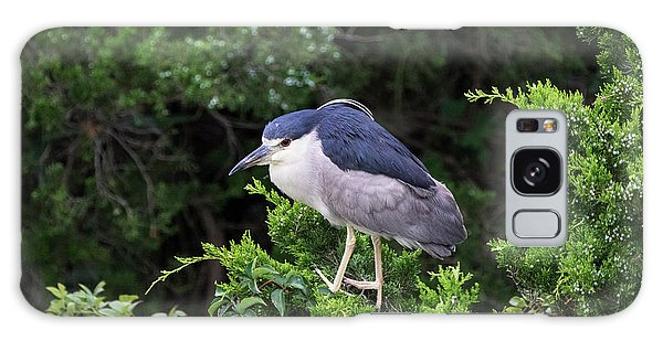 Shore Bird Roosting In A Tree Galaxy Case