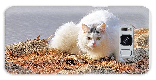 Shore Kitty Galaxy Case