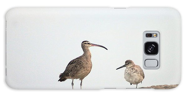 Shorebirds Of Windansea Beach Galaxy Case