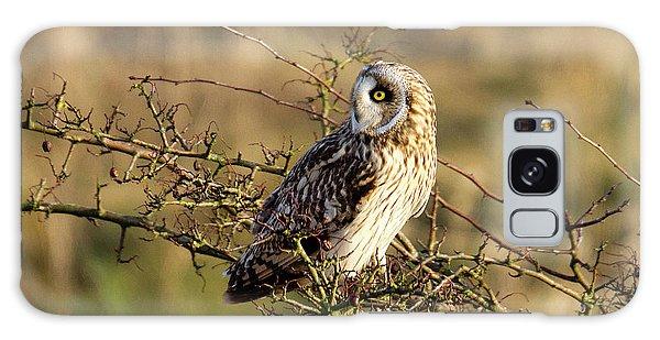 Short-eared Owl In Tree Galaxy Case