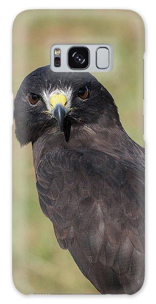 Short-tailed Hawk Portrait - Winged Ambassadors Galaxy Case