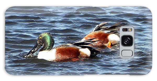 Shoveler Duck 1 Galaxy Case