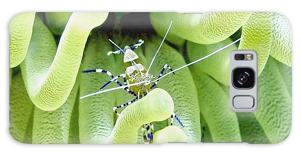 Shrimp And The Anemone Galaxy Case by Amy McDaniel