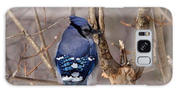 Shy Blue Jay  Galaxy Case by David Porteus