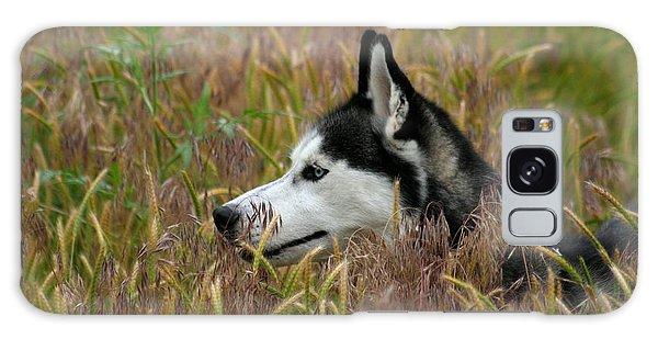 Siberian Husky 38 Galaxy Case
