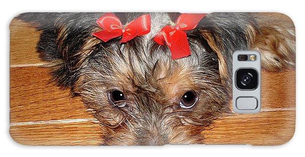 Silky Terrier Puppy Face Galaxy Case