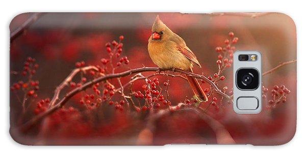 Cardinal Galaxy Case - Simple Beauty by Rob Blair