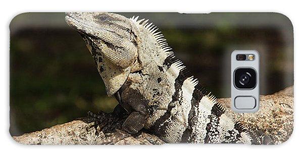 Sir Iguana Mexican Art By Kaylyn Franks Galaxy Case