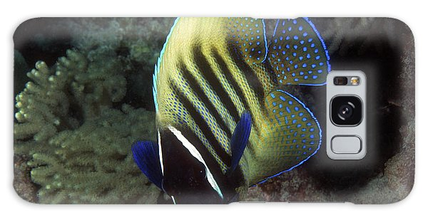 Six Banded Angelfish, Great Barrier Reef Galaxy Case