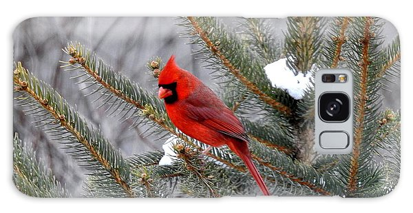 Sleeping Cardinal Galaxy Case by Brenda Bostic